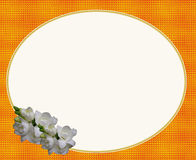 Flor branca do frame oval ilustração royalty free