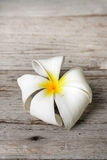 Flor branca do Plumeria Imagem de Stock Royalty Free