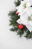 Flor branca do poinsettia por feriados do xmas foto de stock royalty free