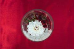 Flor branca em um formulário de vidro redondo em um fundo vermelho fotografia de stock royalty free