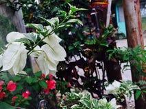 A flor branca está florescendo na luz do dia imagens de stock royalty free