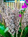 Flor branca fantástica Fotografia de Stock Royalty Free