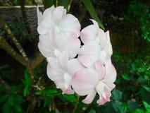 Flor branca fresca da orquídea imagens de stock