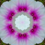 Flor branca modelada com sed cor-de-rosa foto de stock