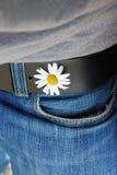Flor branca na calças de ganga da terra arrendada do furo da correia Imagens de Stock