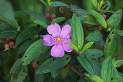 Flor branca na luz solar exterior do ver?o do fundo do verde do jardim fotos de stock royalty free