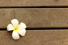 Flor branca no assoalho de madeira Fotos de Stock Royalty Free