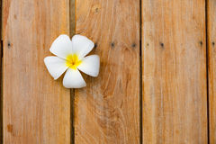 Flor branca no fundo de madeira Imagens de Stock Royalty Free