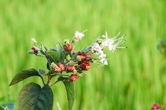 Flor branca no fundo verde foto de stock