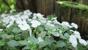 Flor branca no jardim video estoque