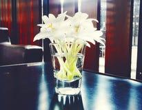 flor branca no vidro de água Imagem de Stock Royalty Free