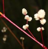 Flor branca pequena Fotografia de Stock Royalty Free