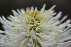Flor branca pequena no verde Fotografia de Stock Royalty Free