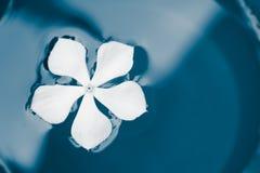 Flor branca que nada na pintura da cerceta fotos de stock royalty free