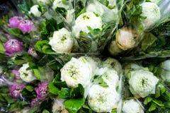 Flor branca & roxa do Gerbera Imagem de Stock Royalty Free