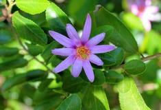 Flor brilhante Imagem de Stock