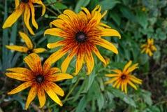 Flor brilhante bonita entre flores e vegetação no jardim Imagem de Stock Royalty Free