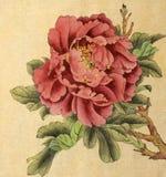 Flor brilhante da peônia ilustração do vetor