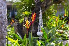 Flor brilhante de Heliconia imagens de stock