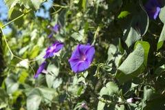Flor brillante Imagen de archivo