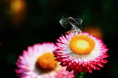 Flor brillante del verano Foto de archivo libre de regalías