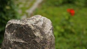 Flor brillante que sube entre piedras, mostrando contraste entre la vida y la muerte puras almacen de metraje de vídeo