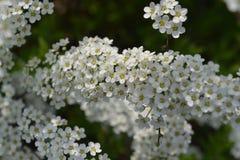 Flor Bush Imagen de archivo libre de regalías