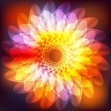 Flor cósmica brilhante ilustração do vetor