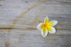 Flor caída en el piso Imagen de archivo libre de regalías
