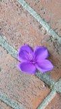 Flor caida fotografía de archivo