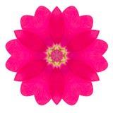 Flor caleidoscópica púrpura Mandala Isolated de la primavera en blanco Imagen de archivo