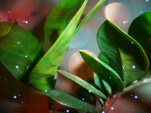 Flor casera imagen de archivo libre de regalías
