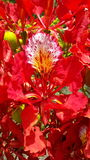 Flor chamativo foto de stock
