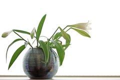 Flor chave elevada Foto de Stock Royalty Free