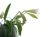 Flor chave elevada Imagem de Stock Royalty Free