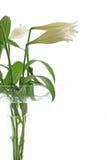 Flor chave elevada Fotografia de Stock Royalty Free