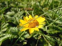 Flor cheia Imagens de Stock Royalty Free