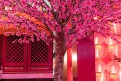 Flor china rosada del ciruelo o flor del albaricoque japonés con el lig rojo Imagenes de archivo