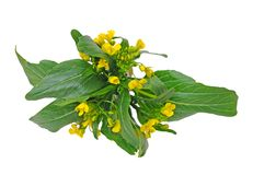 Flor chinesa do espinafre Foto de Stock