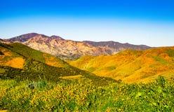 A flor cobriu montes em contraste com montanhas austeros no fundo imagens de stock royalty free