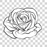 Flor color de rosa aislada del esquema Ilustración común del vector