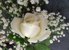 Flor color de rosa del blanco Imagenes de archivo