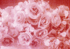 Flor color de rosa del estilo suave abstracto Imagen de archivo libre de regalías