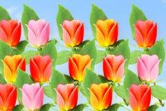 Flor color de rosa del multicolor en fondo del cielo Fotografía de archivo