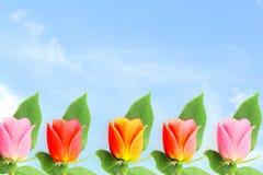 Flor color de rosa del multicolor en fondo del cielo Fotografía de archivo libre de regalías