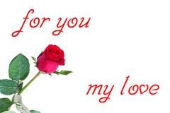 Flor color de rosa del rojo Imagen de archivo libre de regalías
