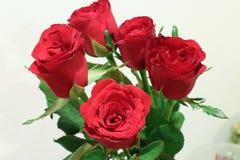 Flor color de rosa del rojo Fotografía de archivo libre de regalías