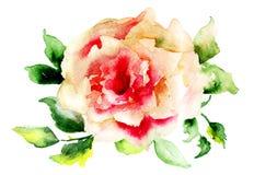 Flor color de rosa estilizada Imagenes de archivo