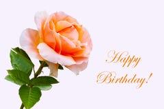 Flor color de rosa hermosa del primer, tarjeta del feliz cumpleaños Fotos de archivo