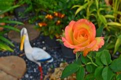 Flor color de rosa de la naranja dulce con la garceta en el jardín fotografía de archivo